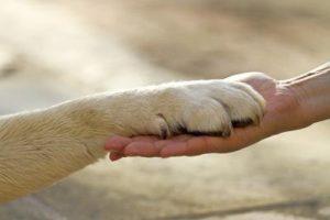 animali_cane_zampa_pet_therapy_ftlia