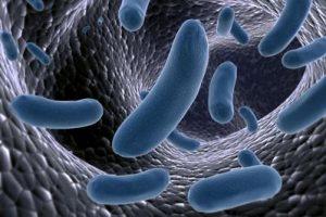 batteri-blu-MicrobiotaMi