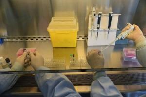 INFLUENZA H7N9,