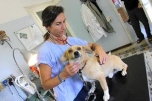 veterinario_cane_ftg