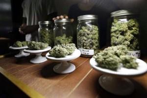 cannabis-cura-leucemia-2