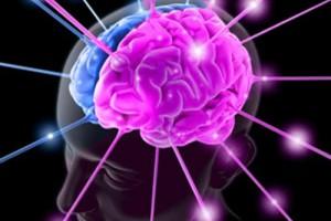 cervello8