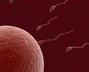 cure fertilità