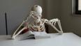 scheletro che studia