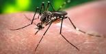 zanzara-portatrice-di-dengue